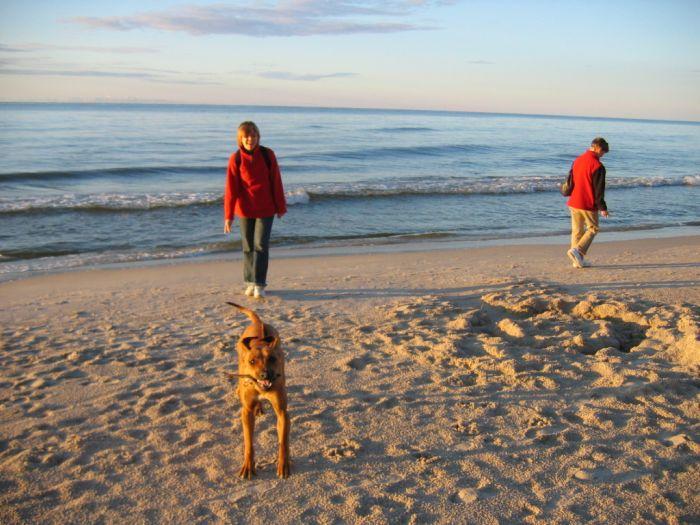 Zobacz temat - Wierszydełka psie czyli Roderyki Andrzeja